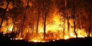 panglima-tni-sekat-kanal-embung-air-solusi-atasi-kebakaran-lahan